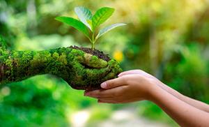 manos-naturaleza